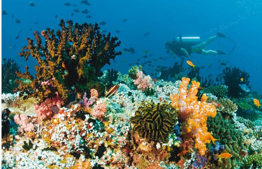 baros-maldives_14