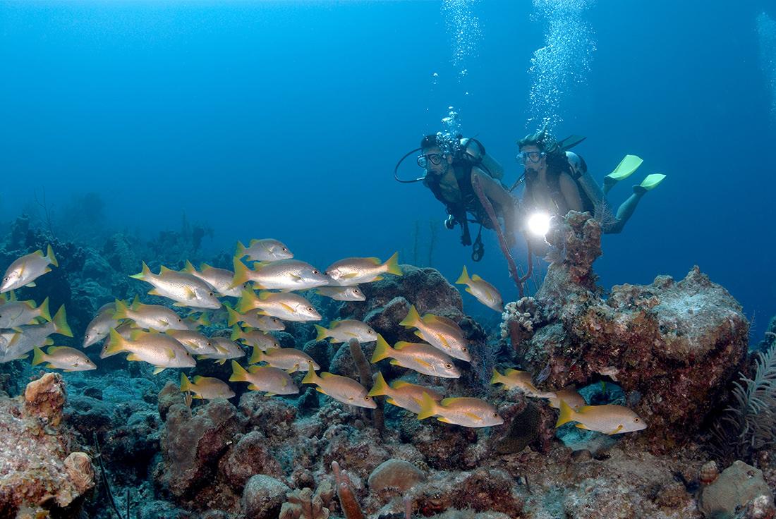 Amanyara - Diving - Fish n Coral Reef 2