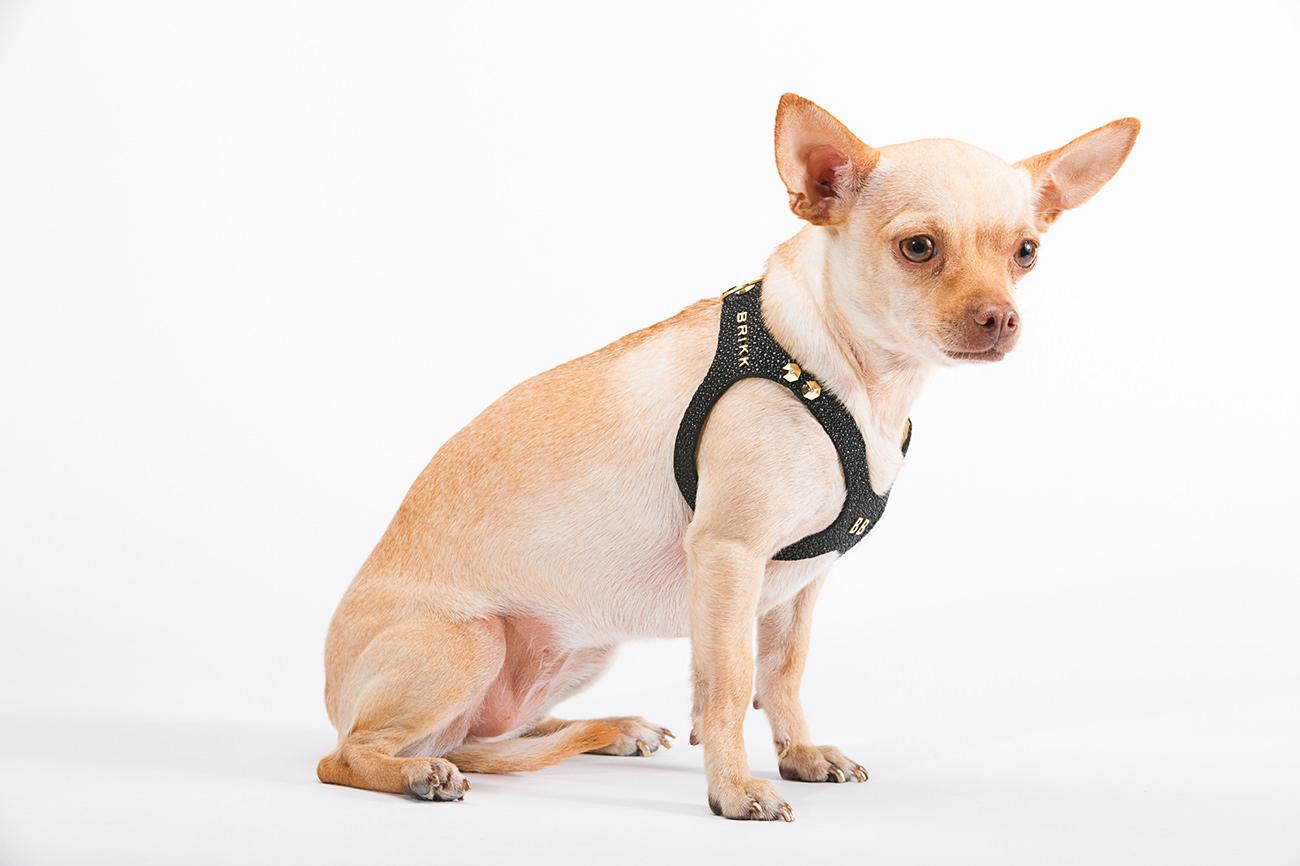 Brikk-Lux-Dog-Harness-1