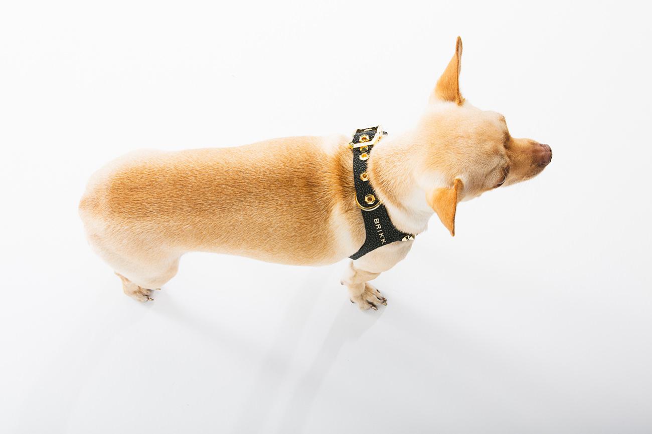 Brikk-Lux-Dog-Harness-2