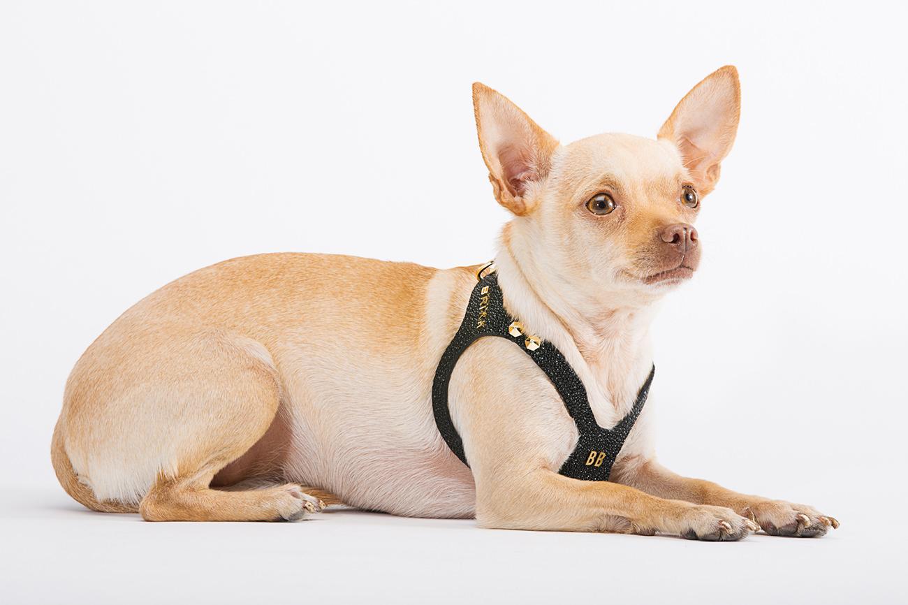 Brikk-Lux-Dog-Harness-4