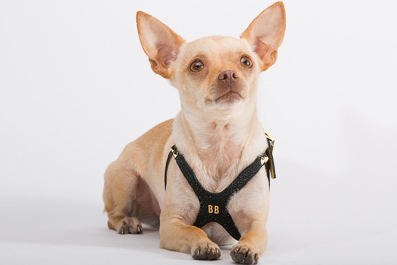 Brikk-Lux-Dog-Harness-5