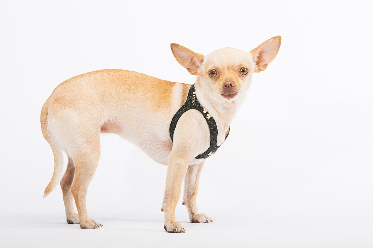Brikk-Lux-Dog-Harness-6