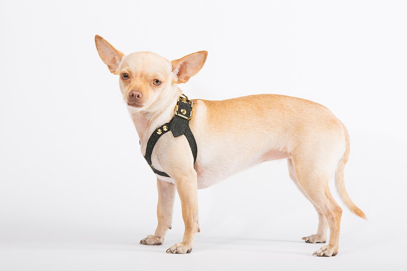 Brikk-Lux-Dog-Harness-7